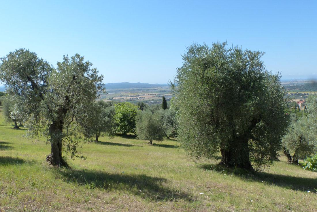 Il Tempo delle Olive 2016