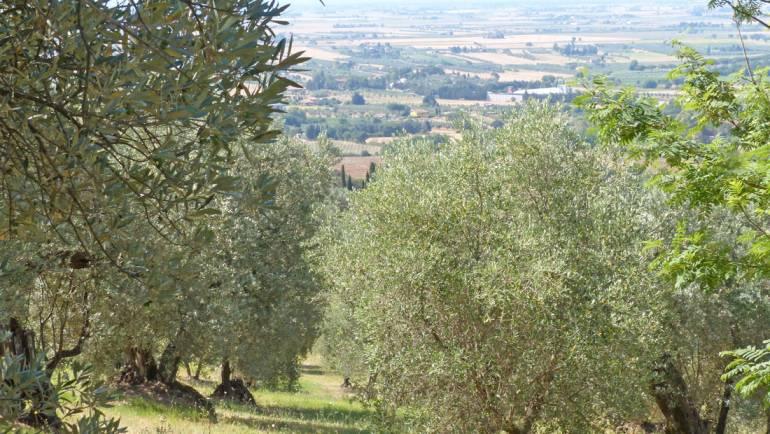 Il Tempo delle Olive 2020/21